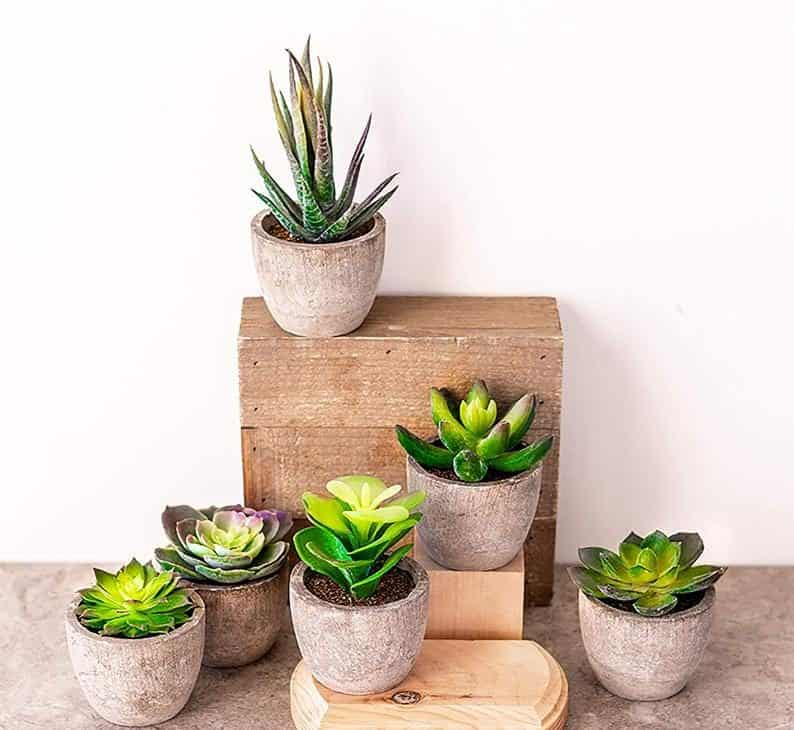 engagement party supply - Faux Succulents