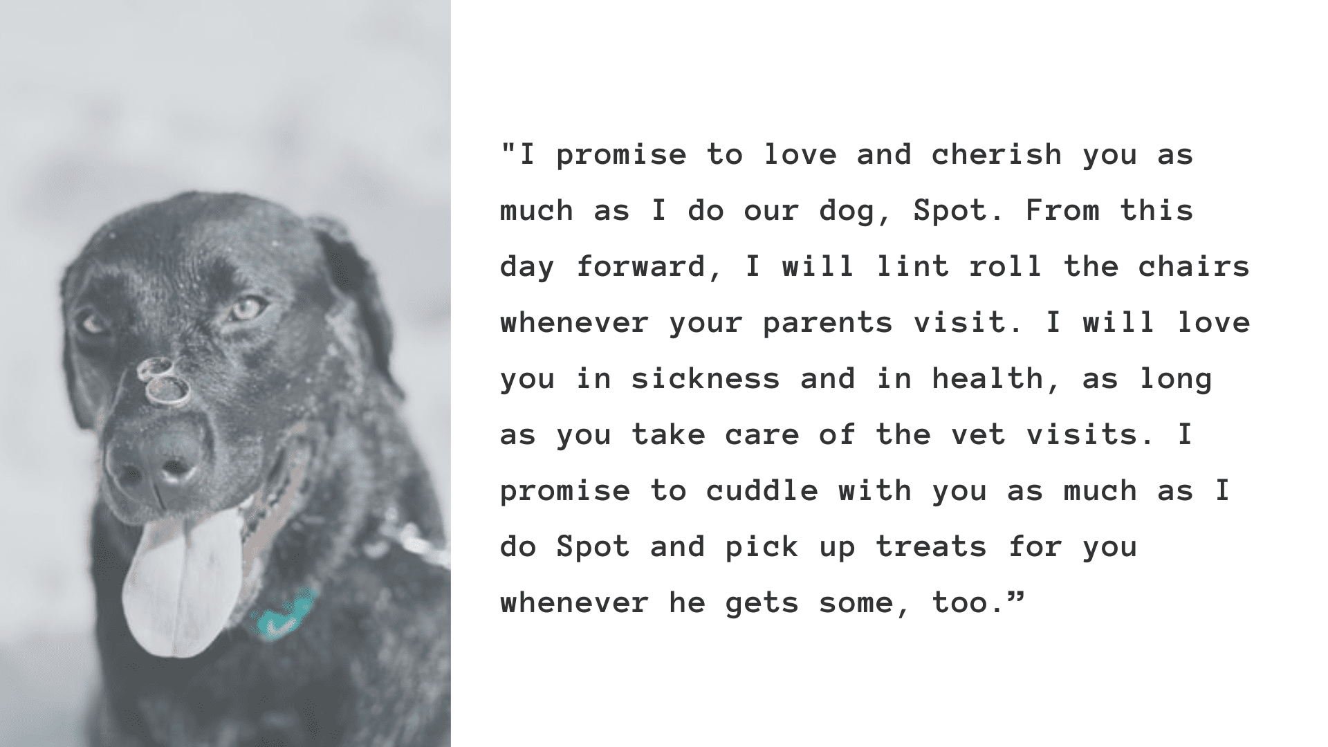 funny wedding vows for dog lovers