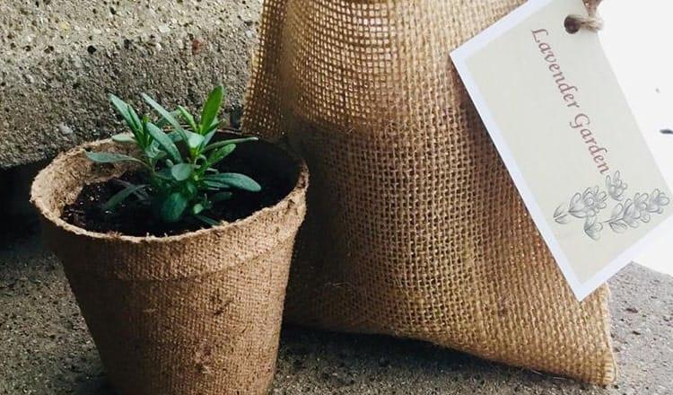Herb Plant Wedding Favors