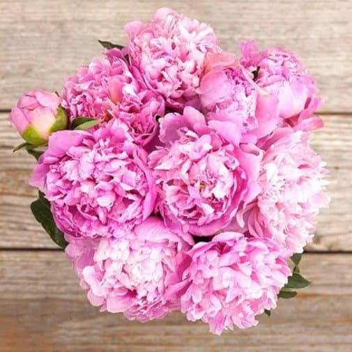 gift for 12th year anniversary: Bouquet of Peonies